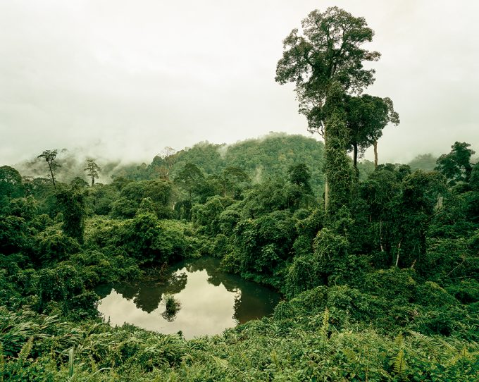 Olaf Otto Becker, Primary Forest 02, Lake, Malaysia 10/2012