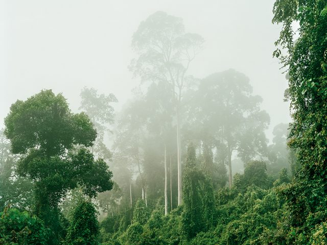 Olaf Otto Becker, Primary Forest 04, Malaysia 10/2012