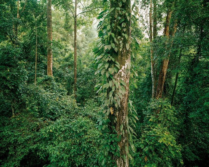Olaf Otto Becker, Primary Forest 10, Malaysia 10/2012