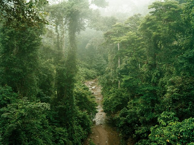Olaf Otto Becker, Primary Forest 11, Malaysia 10/2012