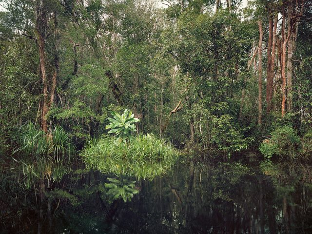 Olaf Otto Becker, Primary Swamp Forest 01, Black Water, Kalimantan, Indonesia 03/2012