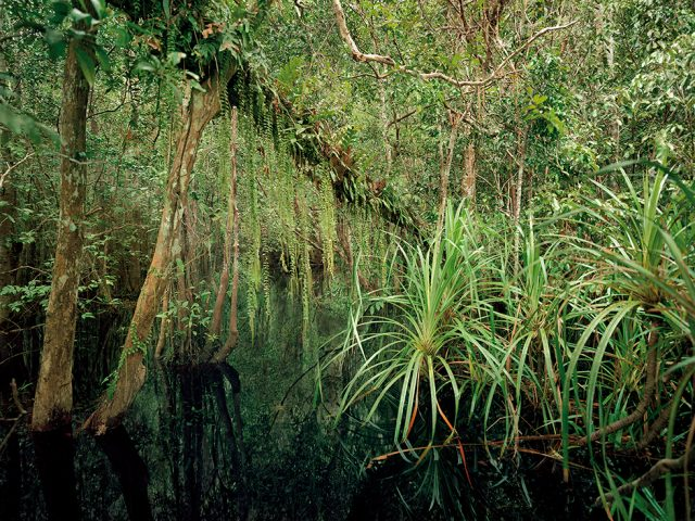 Olaf Otto Becker, Primary Swamp Forest 04, Black Water, South Kalimantan, Indonesia 03/2012