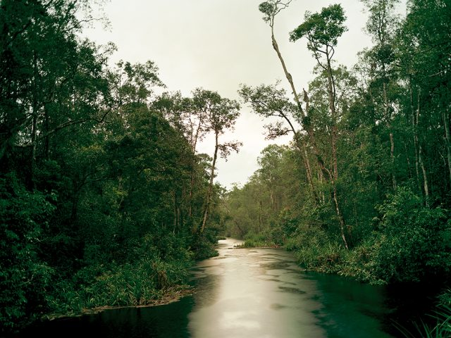 Primary Swamp Forest 05, Late Dusk, South Kalimantan, Indonesia 03/2012