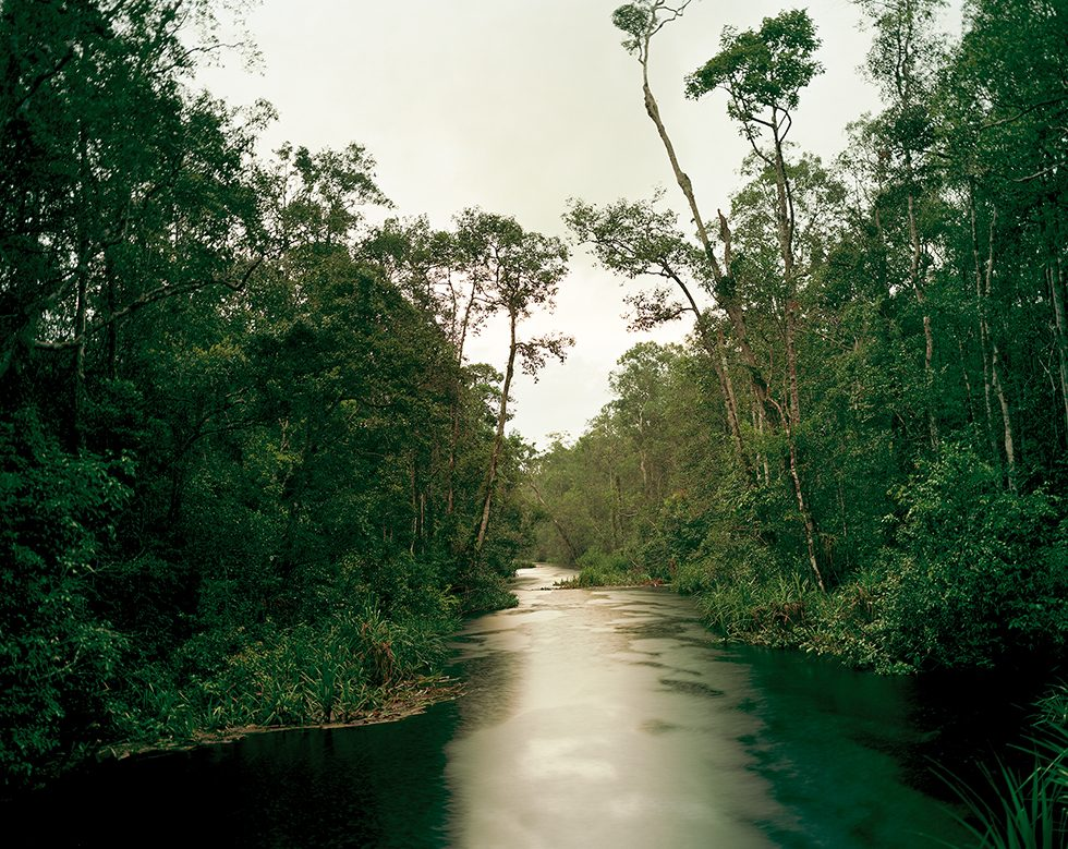 Primary Swamp Forest 05, Late Dusk, South Kalimantan, Indonesia, 03/2012