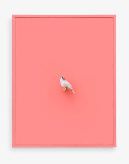 Daniel Handal, White Zebra Finch (Orange Flamingo)