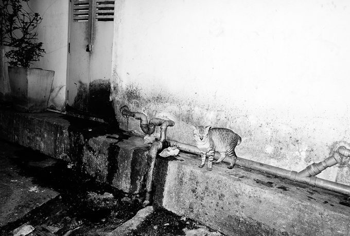 Victor Cobo, Lonely Alley Cat