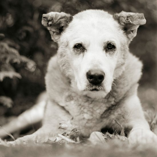 Isa Leshko, Bumper, Mixed Breed Dog, Age 17, II