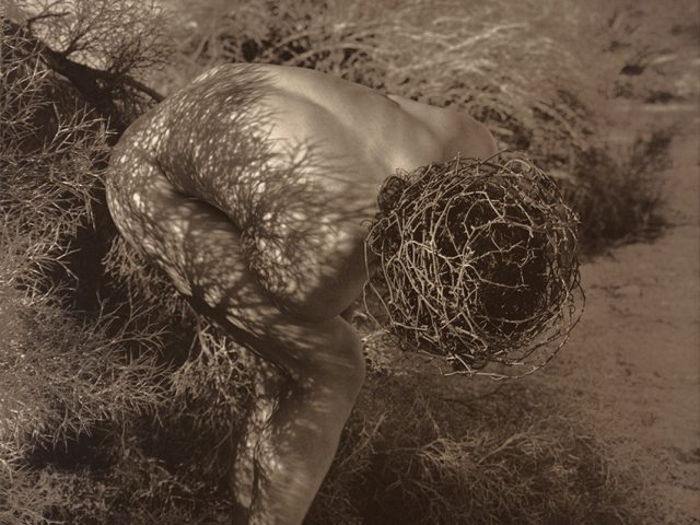 Herb Ritts, Male Nude with Thorns, Joshua Tree