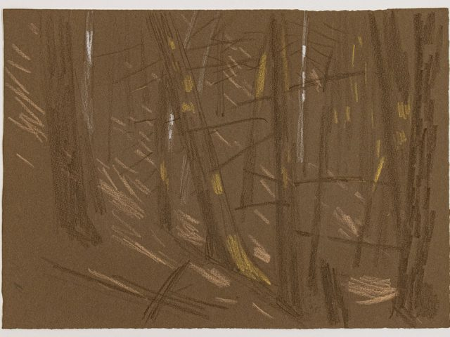 Paul Cadmus, Study of Trees in Forest III